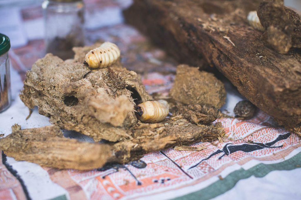 fête du ver de bancoule farino