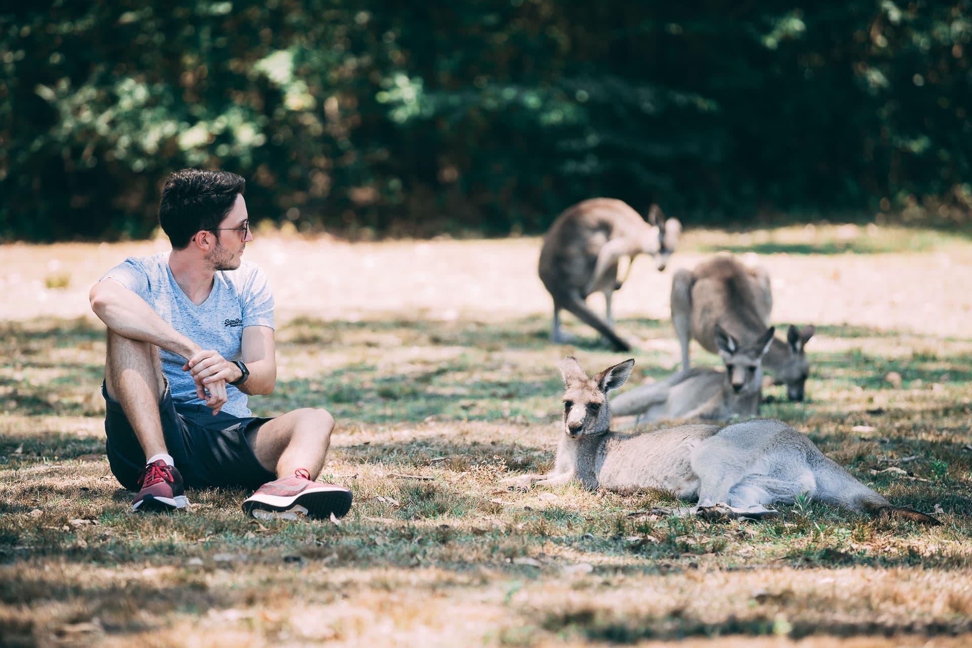 morisset park sydney kangourous
